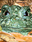 Parable of the Frog